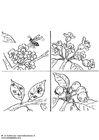 Coloring pages pollinate