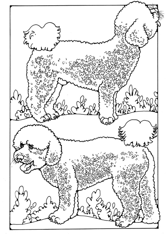 Coloring page poodles