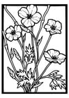 Coloring pages Poppies