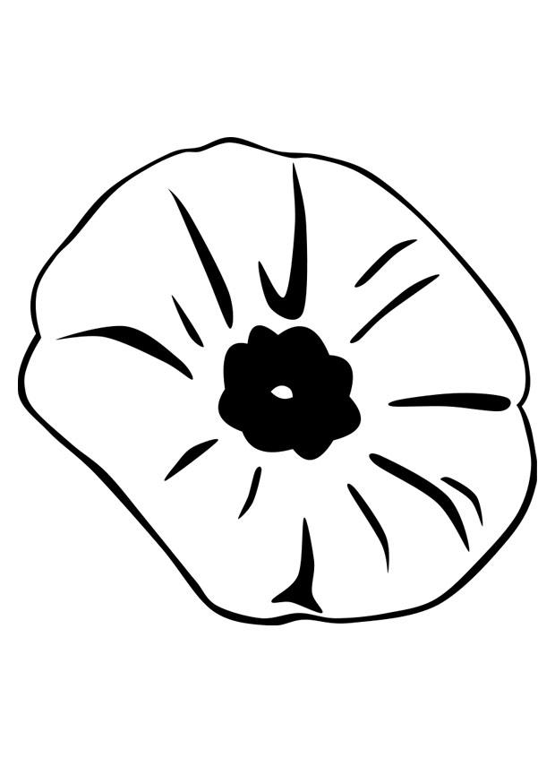 coloring page poppy img 22899