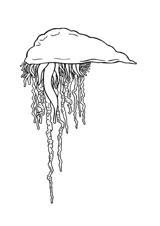 Coloring page Portuguese man-o-war