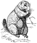 Coloring pages Prairie Dog
