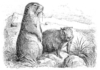 Coloring page prarie dogs