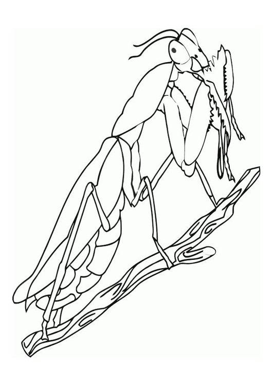 Coloring page praying mantis