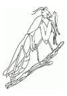 Coloring page praying mantis