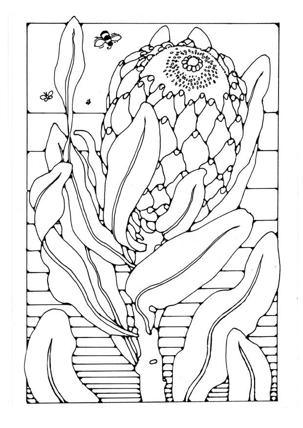 Coloring Page Protea Free Printable Coloring Pages