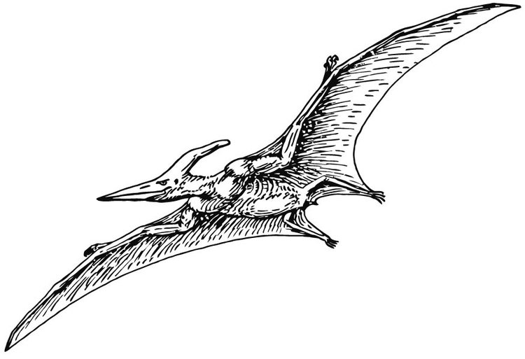 Coloring page Pterodactylus