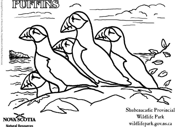 Coloring page puffins