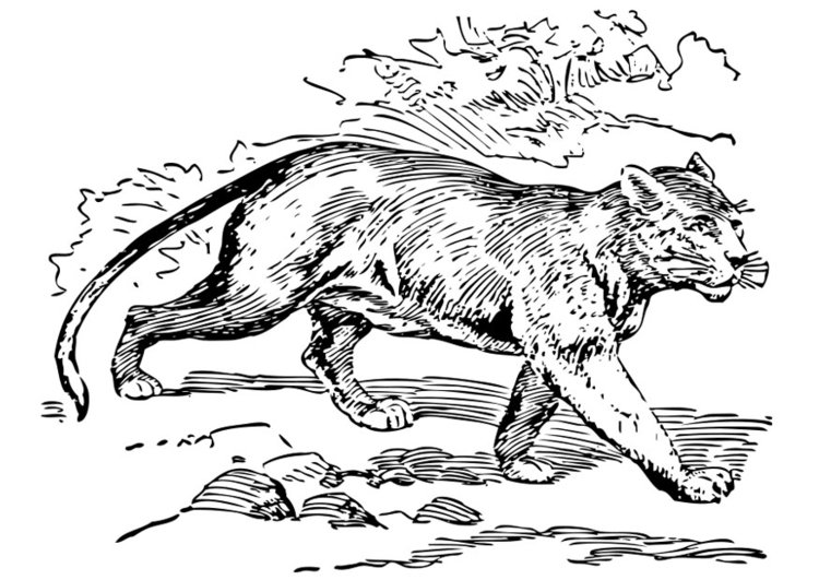 Coloring page puma