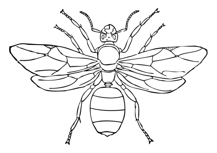Coloring page queen ant