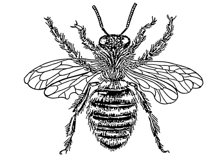 Coloring page Queen bee