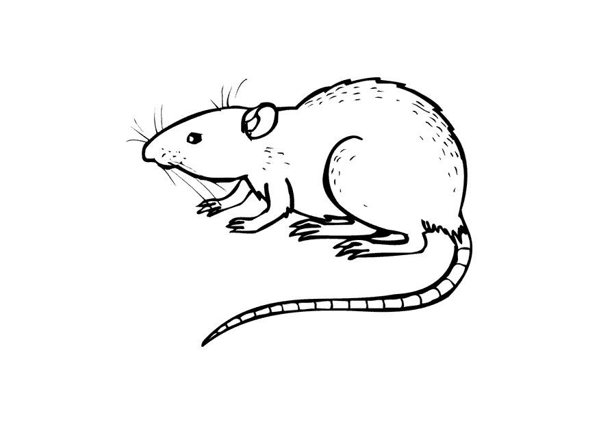 Coloring Page Rat Img 10437
