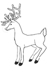Coloring pages reindeer