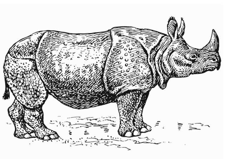 Coloring page Rhinoceros