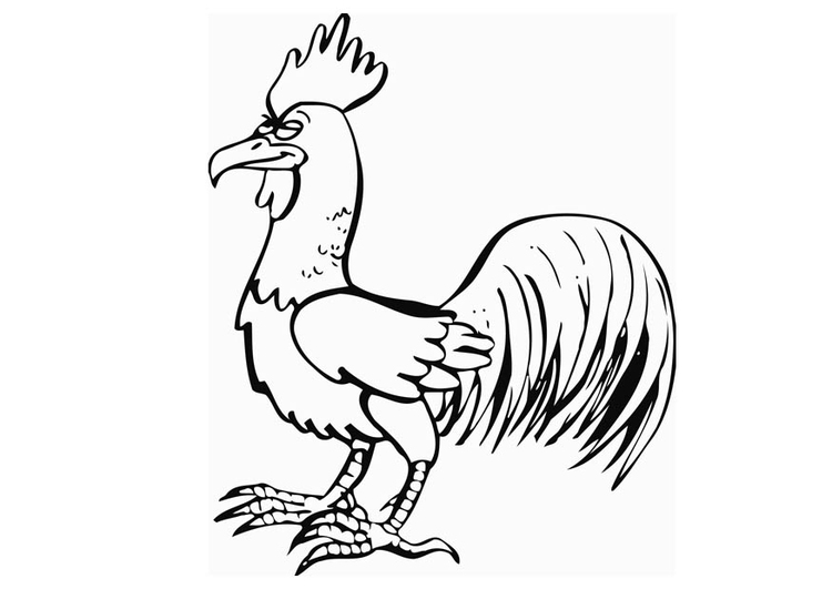 Coloring page rooster