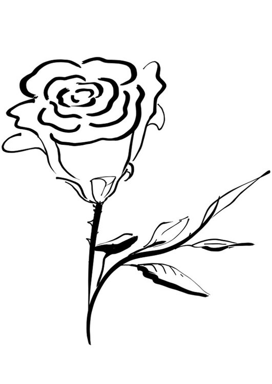 Coloring page rose