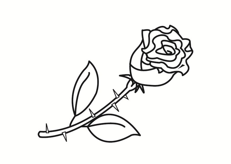 Free Printable Roses Coloring Pages For Kids | 532x750