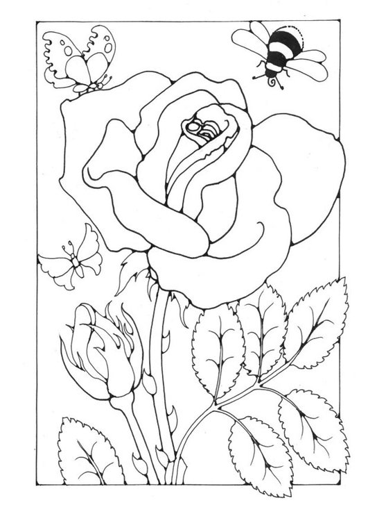 Coloring page rose with bee and butterfly
