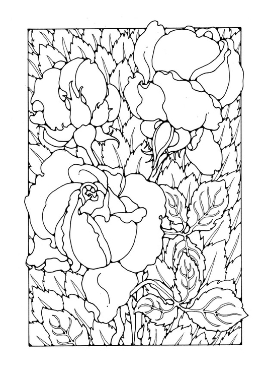 Coloring Page Roses Free Printable Coloring Pages Img 27745