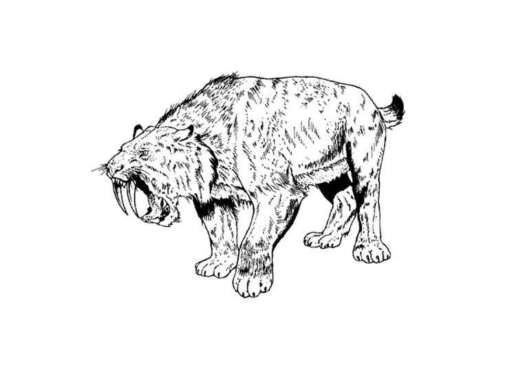 Coloring page saber tooth tiger