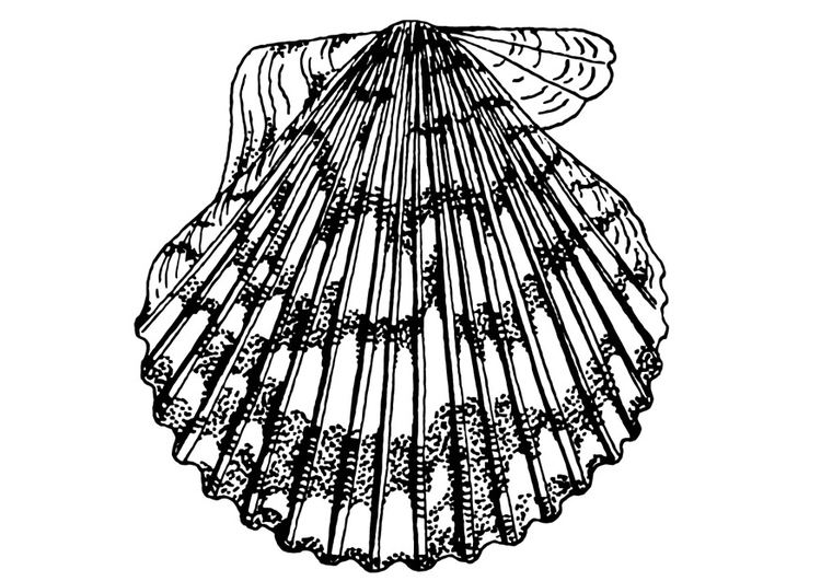 Coloring page Scallop