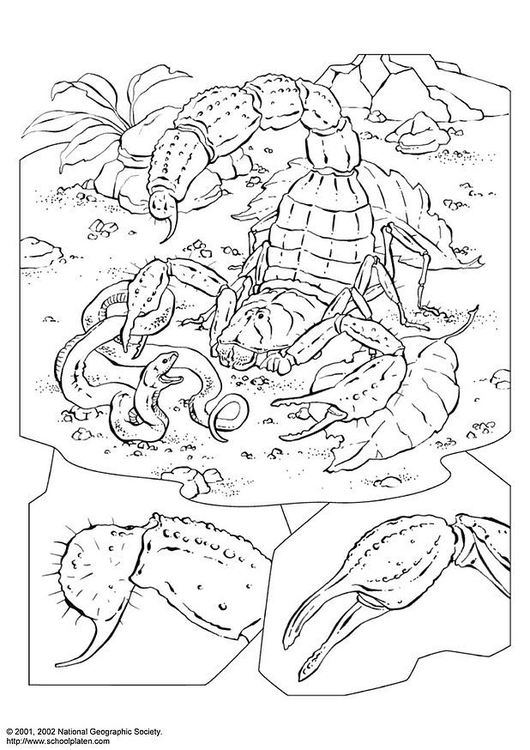 coloring page scorpion free printable coloring pages coloring page scorpion free printable