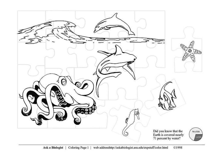 Coloring page sea life
