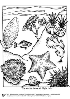 Coloring page sea shore high tide