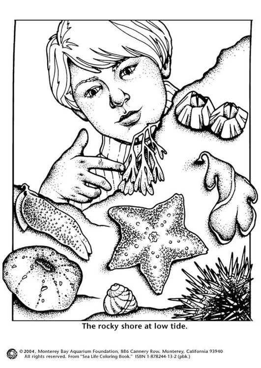 Coloring page sea shore low tide