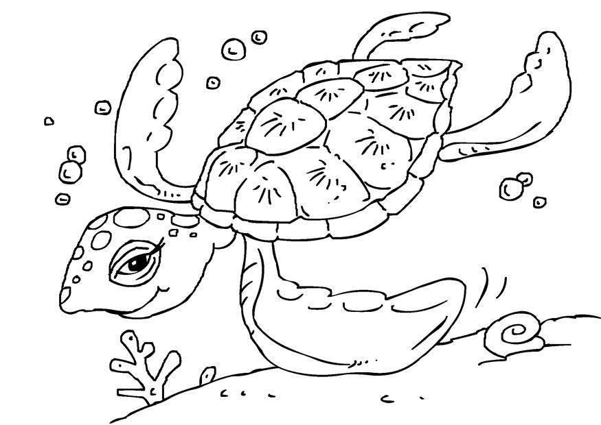 Coloring page sea turtle img 27229
