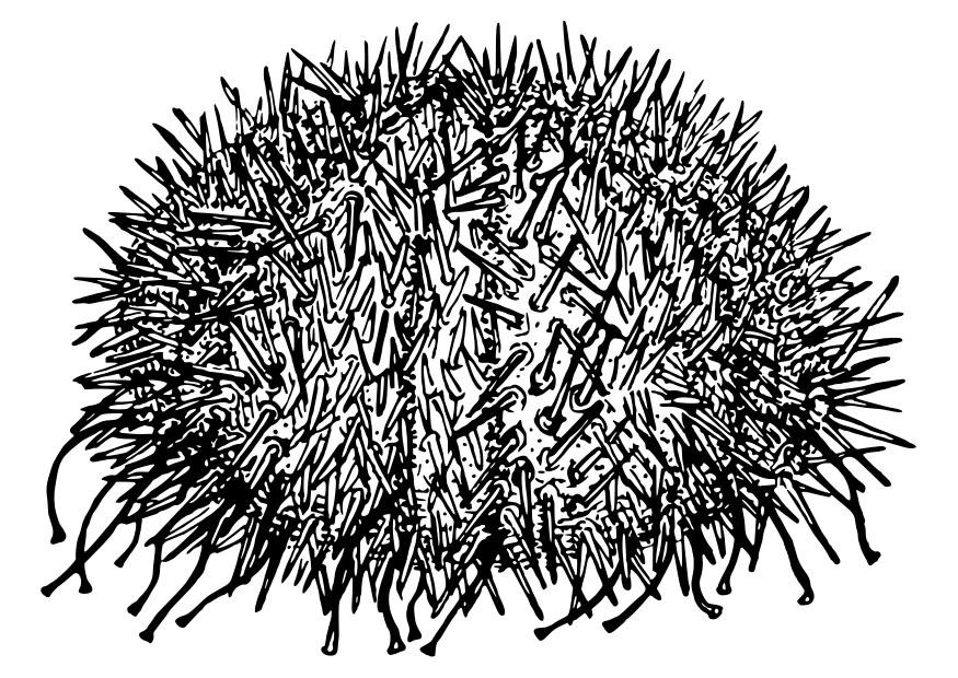 Coloring page sea urchin - img 30114.