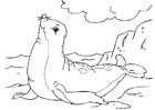 Coloring pages seal