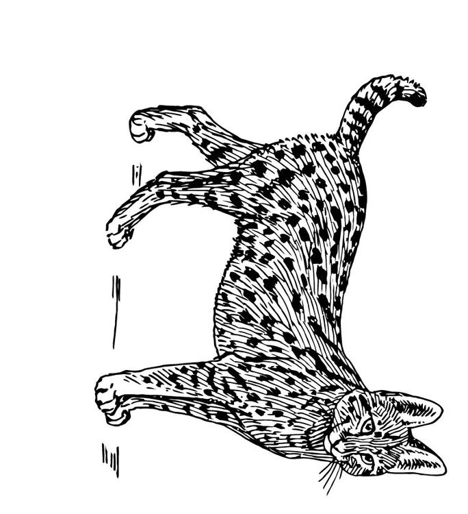 Coloring page serval img 15764