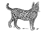 Coloring pages serval