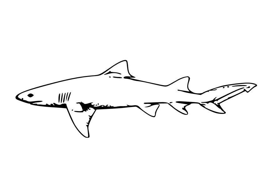 Coloring Page Shark Miakenasnet