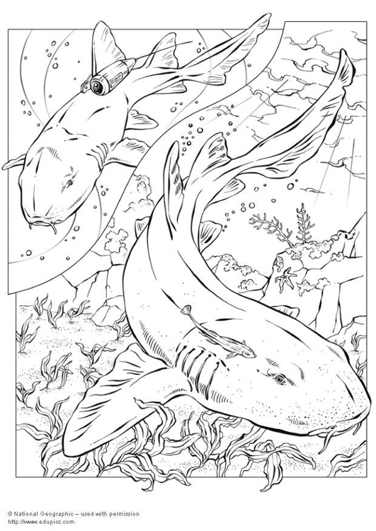 Coloring page sharks