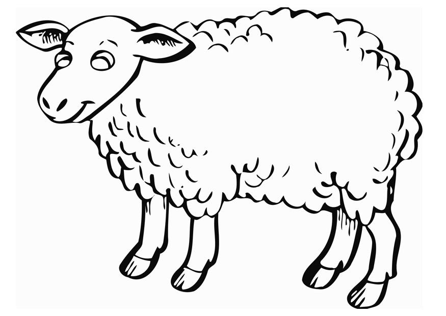 Coloring Page Sheep Img 12840