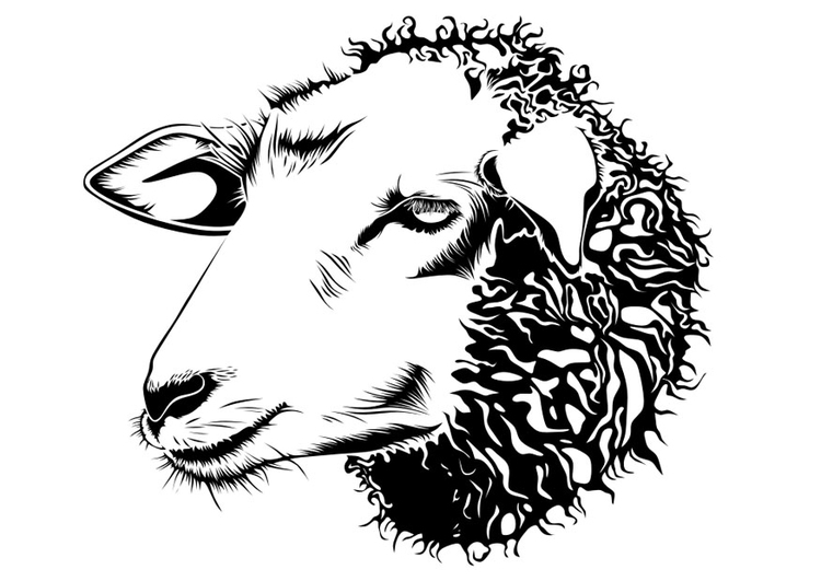 Coloring page sheep