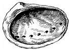Coloring page shell - abalone