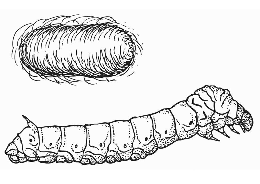 Coloring Page Silkworm With Cocoon