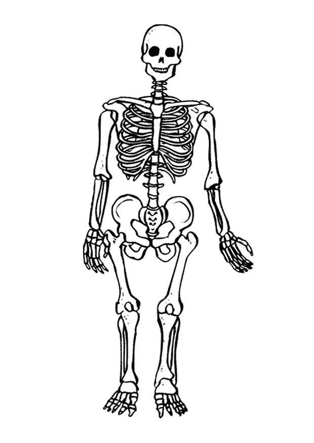 coloring page skeleton