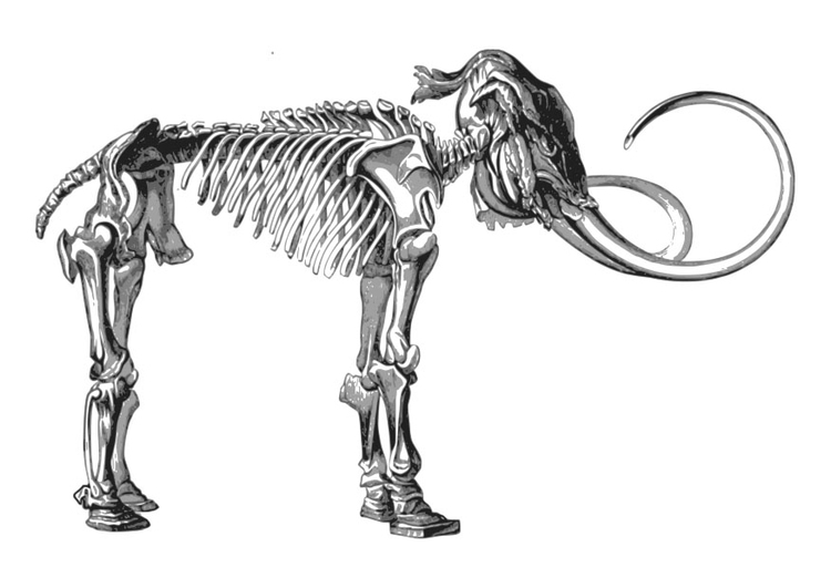 Coloring page skeleton mammoth