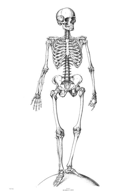 skeletal system coloring page - coloring page skeleton img 9340