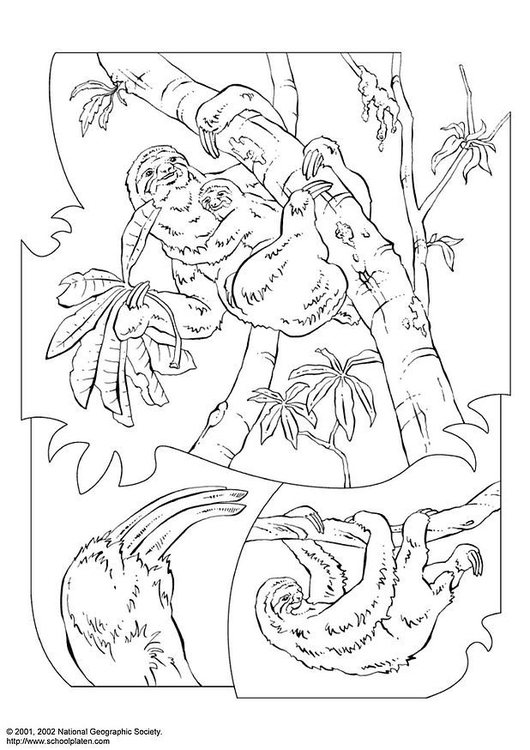 Elephant Family Playing | Animal coloring pages, Coloring pages ... | 750x530