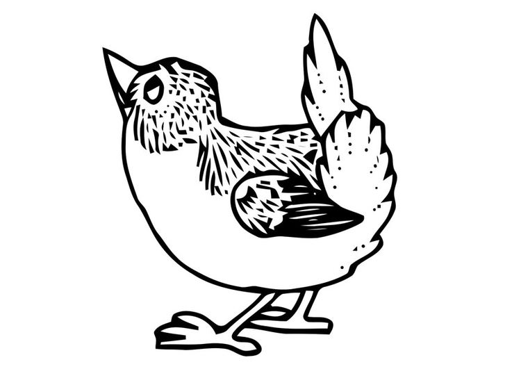 Coloring page small bird