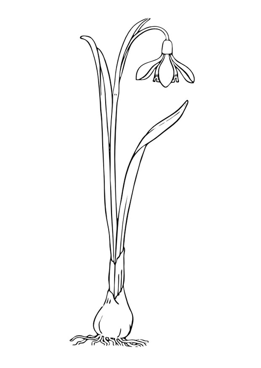 Coloring page snowbells