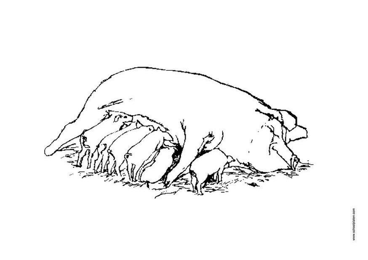 Coloring page sow