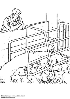 Coloring page sow with piglets