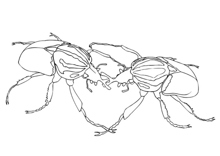 Coloring page sparring beetles