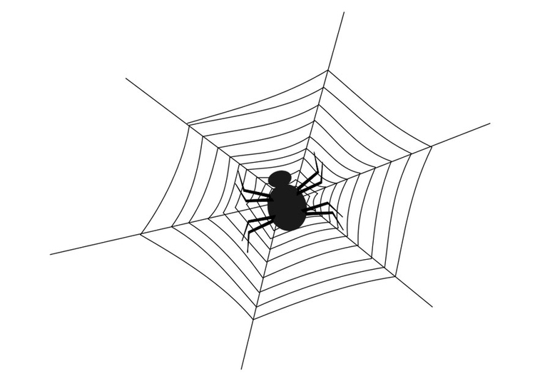 Coloring page spider web with spider